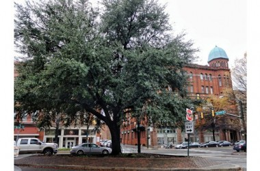 Protestors win fight to remove Oak Tree reminiscent of lynching on site of Maggie L. Walker statue