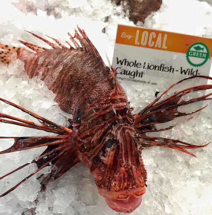 The invasive exotic fish can be found at Tallahassee Whole Foods market.
