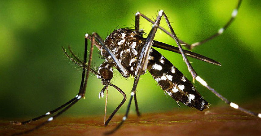 Mosquito-borne Zika cases confirmed in Florida
