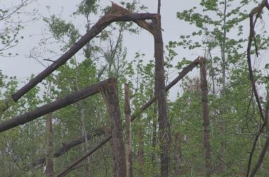 Florida, Feds still working on timber money