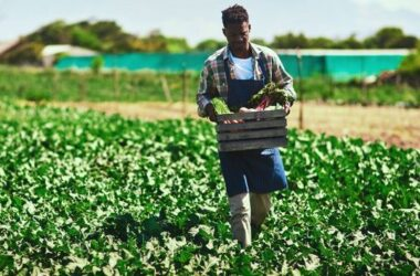 After a century of land theft and exclusion, Black farmers getting needed government aid