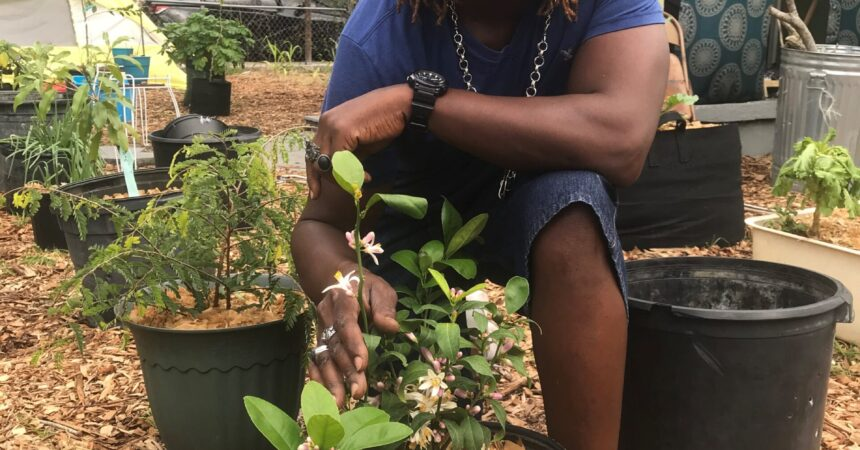 'Generational' garden providing food security in the Black community